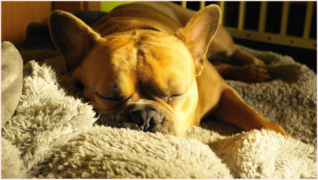 横向き寝専用 枕 ヒルナンデス おすすめ 枕